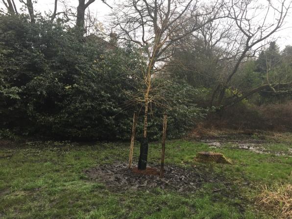 New Village Pond tree